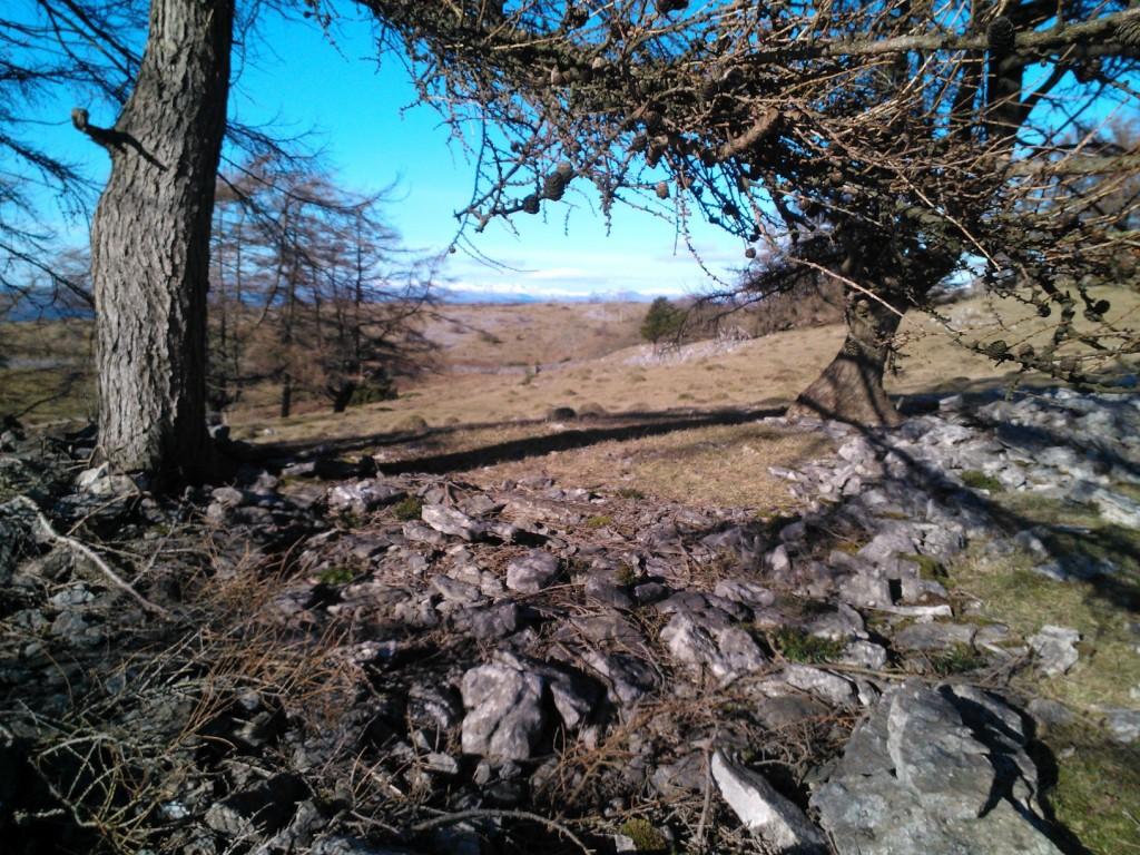 Helsington Barrows trees